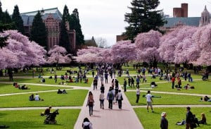 A crowd of students enjoying the quad's cheery trees at the University of Washington.