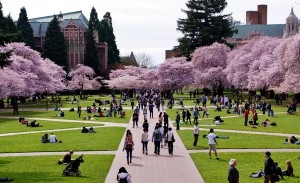Many students on the University of Washington campus quad in spring.