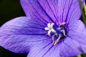 The color purple (or violet) represents wisdom.