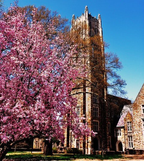 Rhodes College - Best Colleges in the Southeast