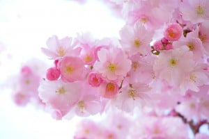 The color pink is great to use in order to lower stress.
