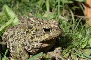 Harry Potter: Neville, though known for his toad, would major in horticultural science.