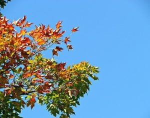 Just like the leaves changing color, there's a transition period during college