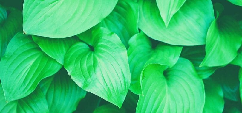 A close-up shot of green leaves.