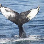 Sea grant colleges focus on marine science.