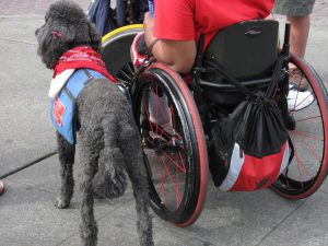 ADA service animals are allowed on college campuses.