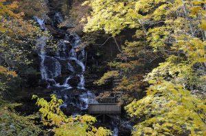 Flickr user US Forest Service