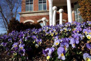 flowers at elon university