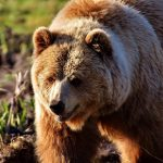 Burch the Bear has an interesting history.
