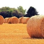 Rolls of hay on a field.