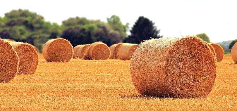 Rolls of hay on a field.