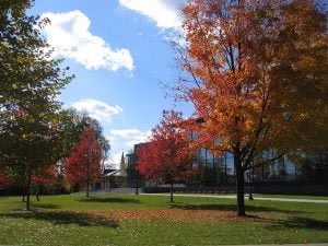 Autumn trees on the Lafayette College campus.
