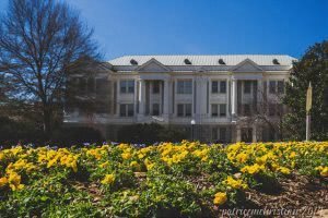 Candler Hall on the campus of The University of Georgia with yellow flowers on the foreground.