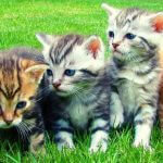 Five kittens sitting together on a grassy lawn.