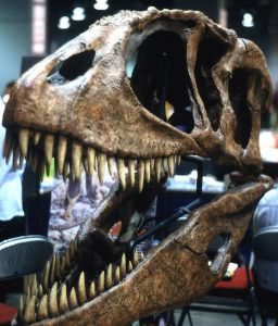 Theropod skull.