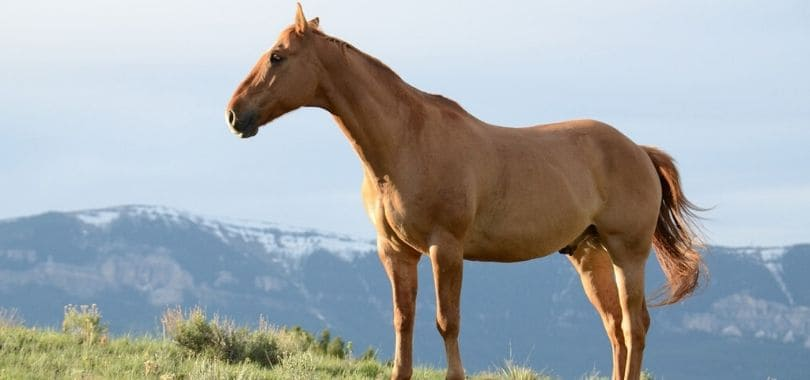 A horse standing atop a hill.