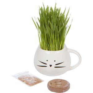 Cat Ladies organic grass growing kit plants for dorm rooms