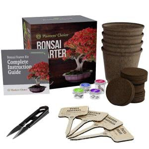 Planters Choice Bonsai starter kit plants for dorm rooms